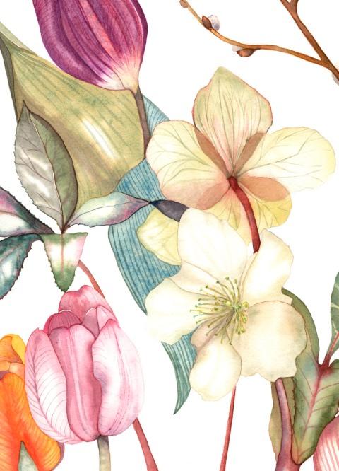 Hellebores, Tulips