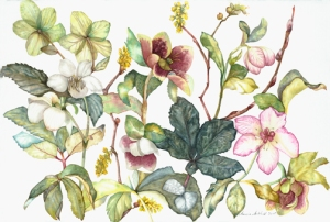 "Lots of new work, and way behind in putting them online, like this 18""x24"" watercolor of Hellebores."